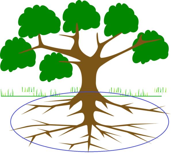 Bokashi aus Küchenabfällen wird entlang der Baumkrone vergraben