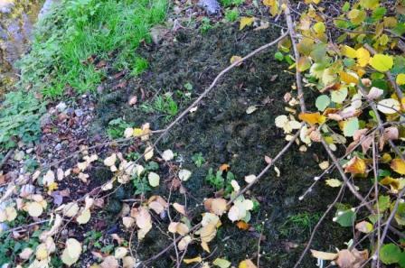Fermentierter Rasen Herbstlauch und Baumschnitt