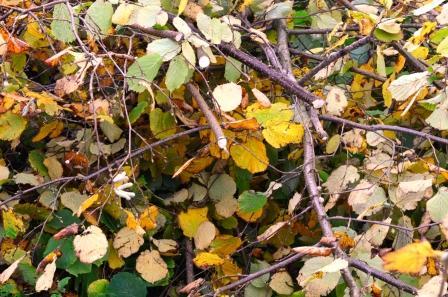 Herbstlaub und Baumschnitt