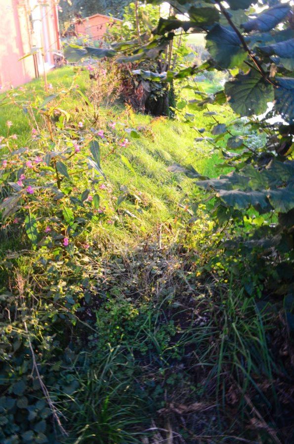 Herbstlaub und Baumschnitt vom Vorjahr