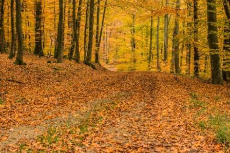 gemulchter Waldboden