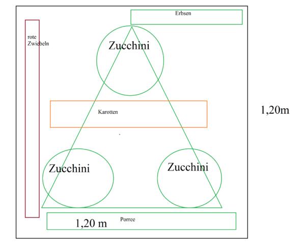 Pflanz- und Aussaatpläne Zucchinibeet