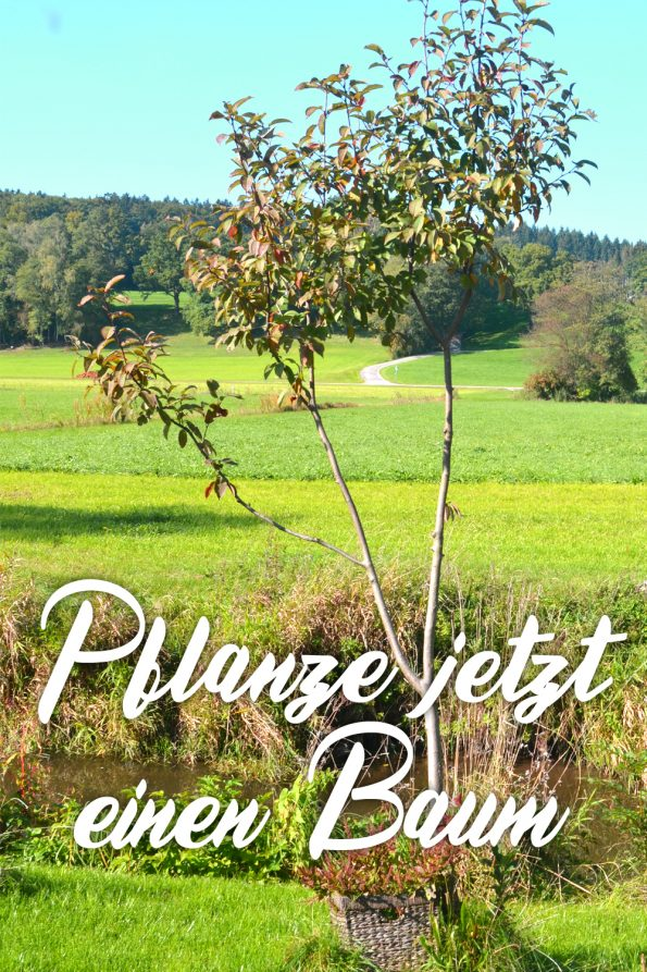 Bäume pflanzen im Herbst