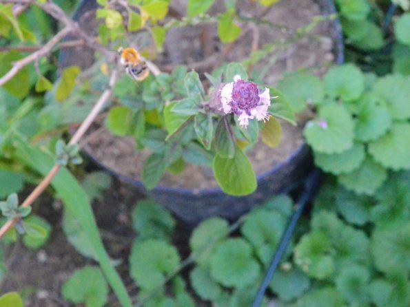 Trinkstelle für Hummeln, Bienen und andere Insekten