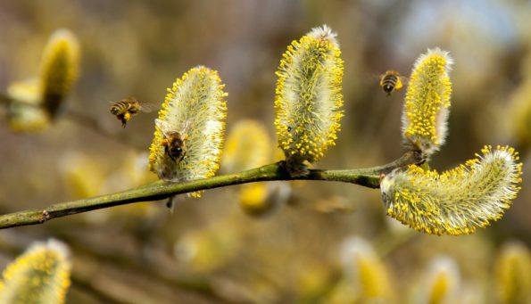Garten im März - Sitzplätze, Nahrung für Bienen