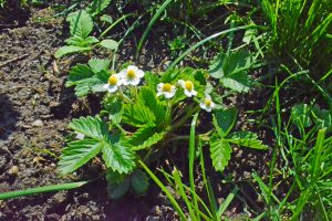 Garten im April, Gartenarbeit im April