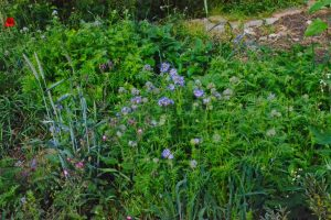 Pflanzen düngen biologisch
