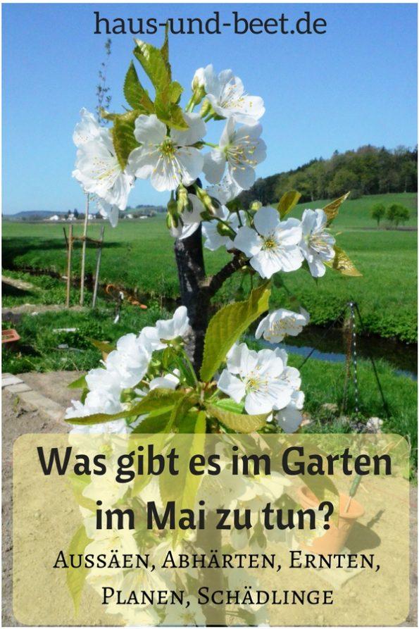 Was gibt es im Garten im Mai zu tun