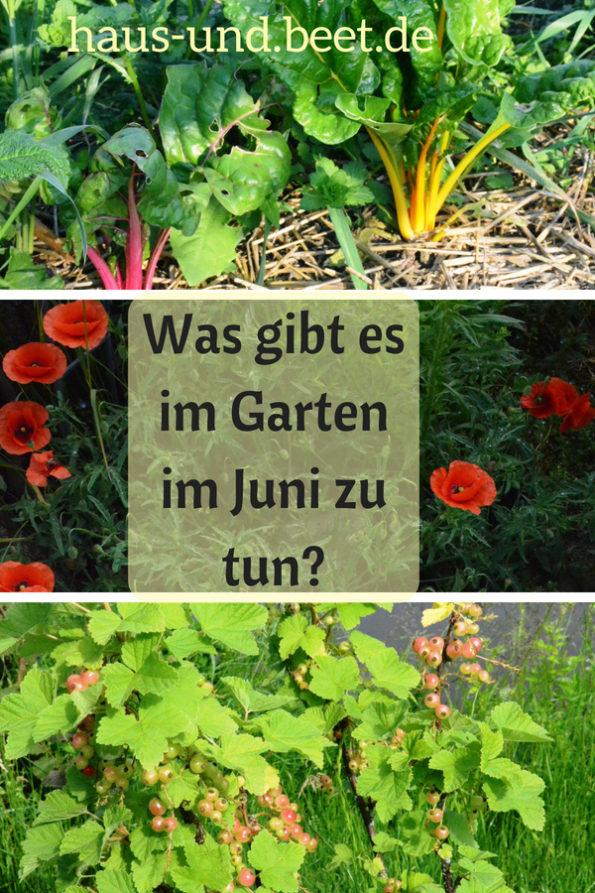 Was gibt es im Garten im Juni zu tun
