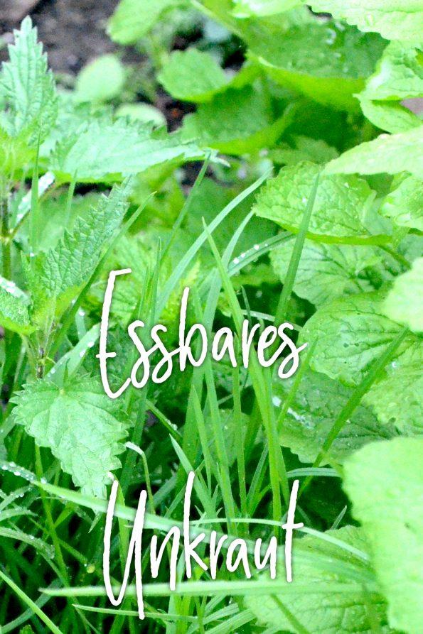 gesundes essbares Unkraut aus dem Garten