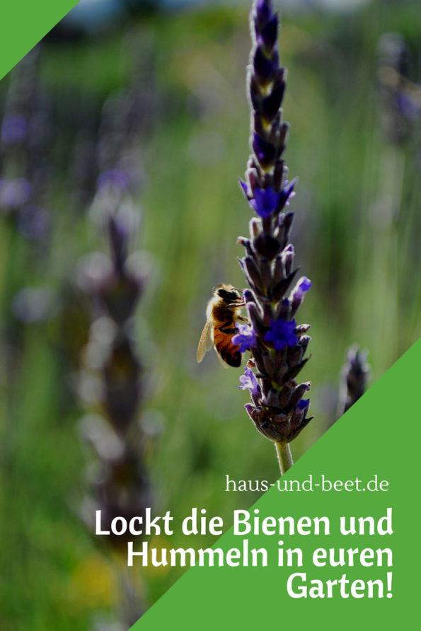 Lockt die Bienen und Hummeln in euren Garten