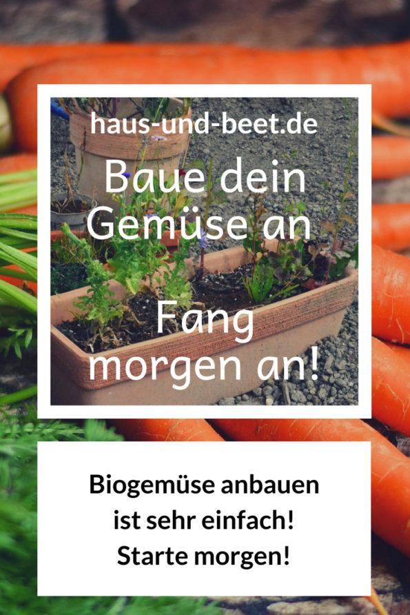 Baue dein Gemüse an