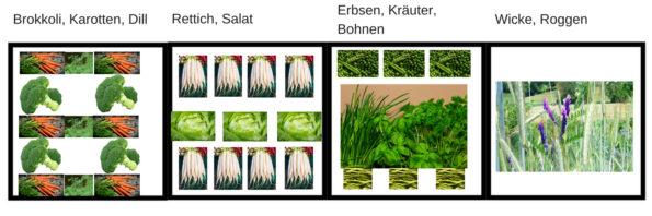 Gemüsebeet anlegen ideen anfänger