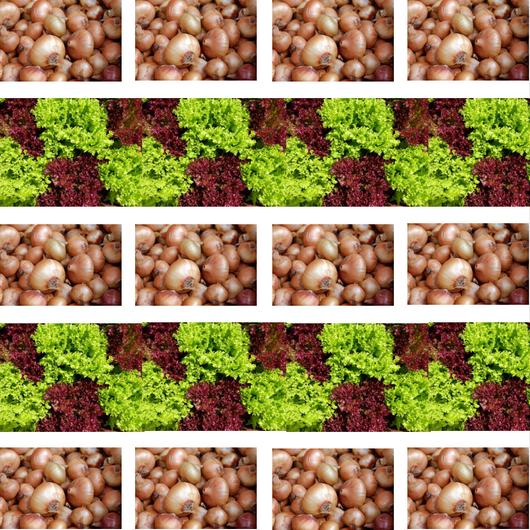 Zwiebel und Salat Beet Aussaatpläne im Oktober