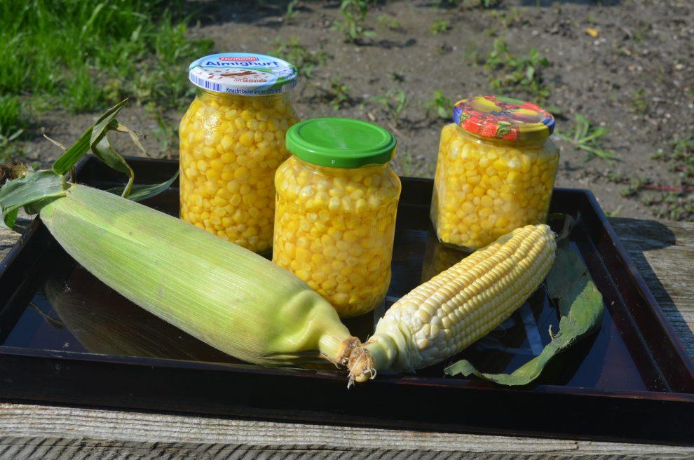 Mais kochen in nur 10 Minuten
