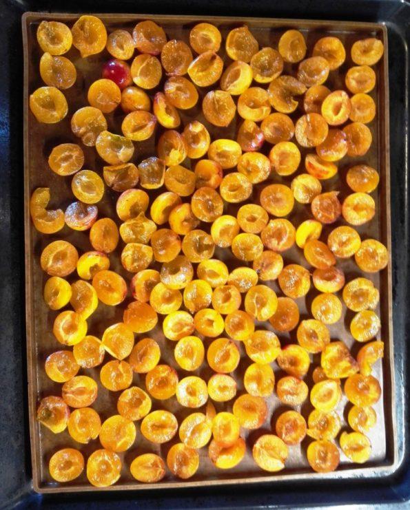 Obst und Gemüse trocknen Mirabellen im Backofen trocknen