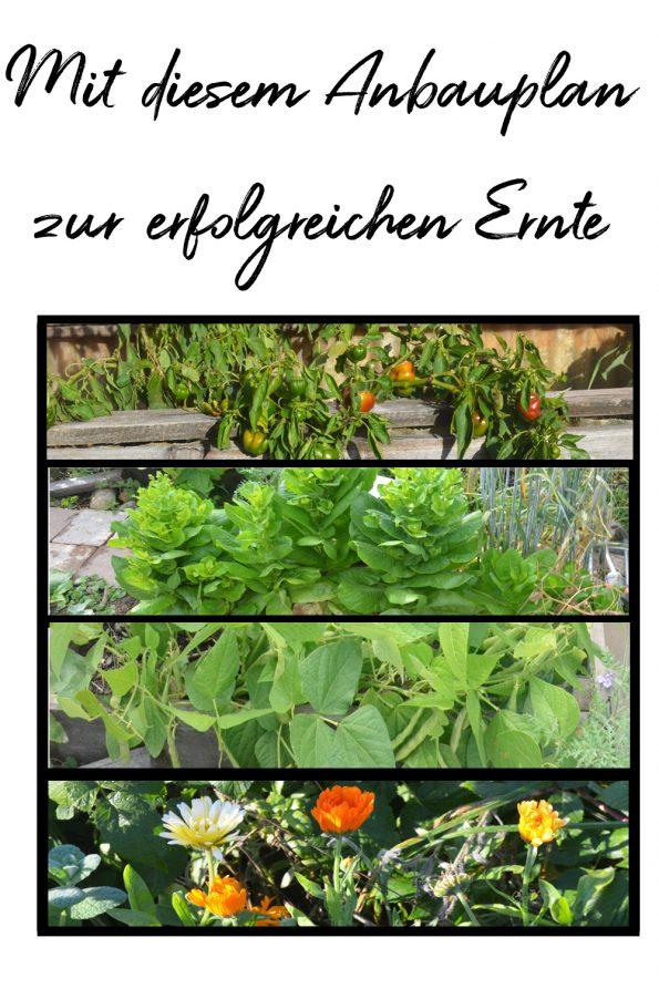 Gemüsegarten Anbauplan - So gelingt dir Gemüse anbauen ...
