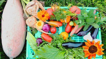 Gemüsegarten Anbauplan Gemüse anbauen Mischkultur