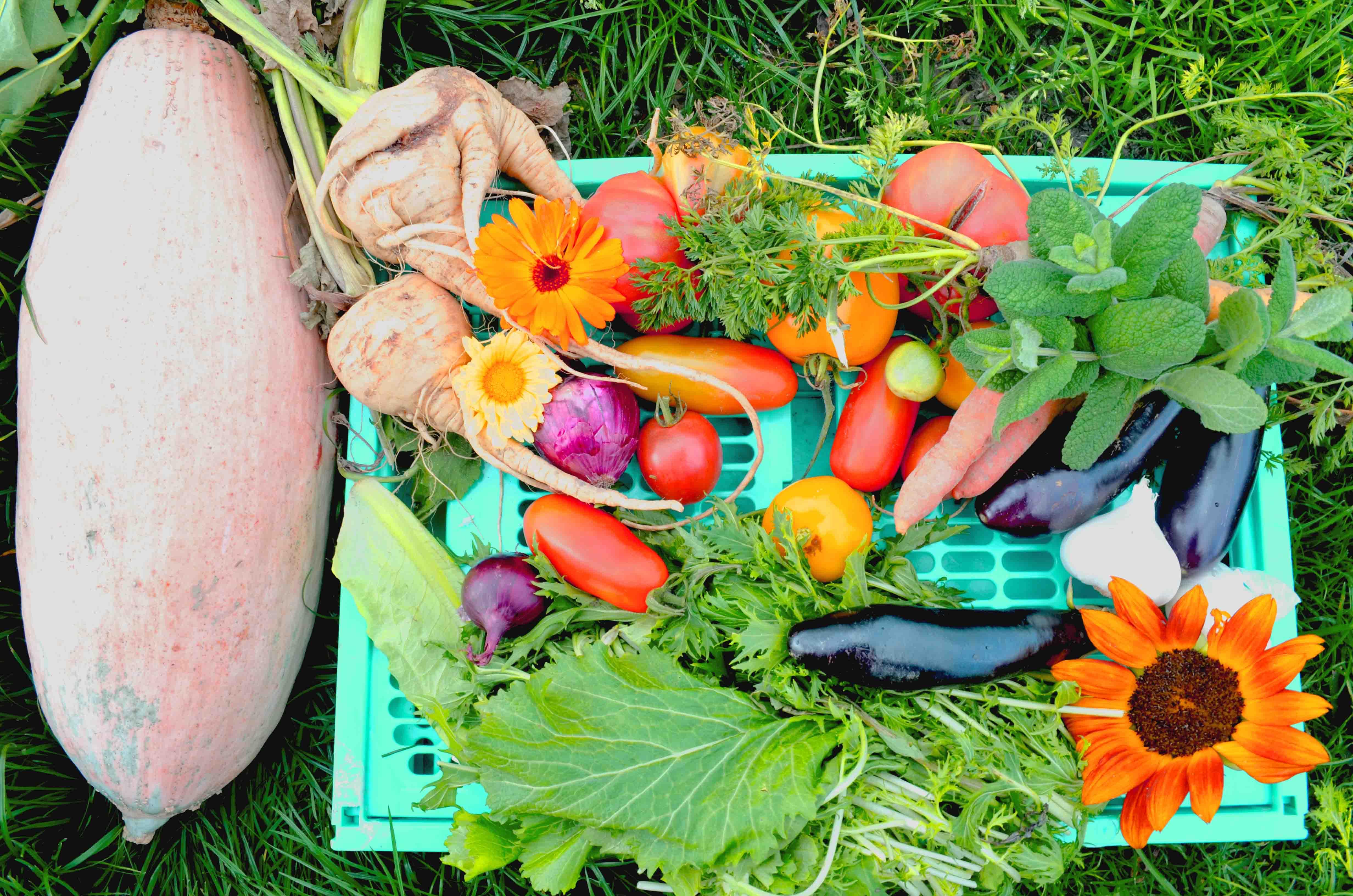 Gemüsegarten Anbauplan - So gelingt dir Gemüse anbauen - Haus und Beet