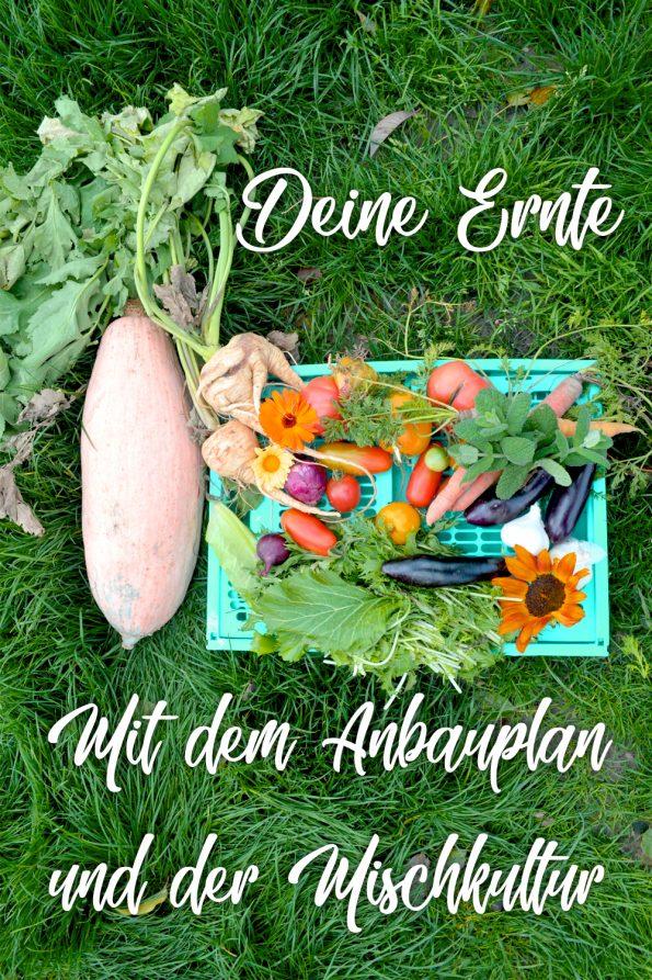 Gemüsegarten Anbauplan Gemüse anbauen mit Mischkultur
