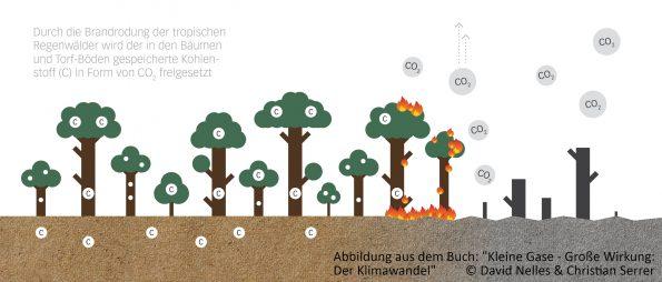 CO2 Ausstoß durch Waldrodung