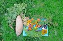 Saisonales Gemüse in Deutschland