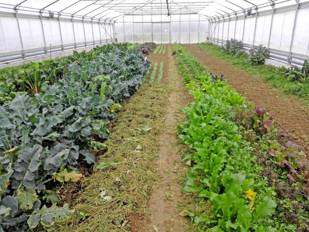 Aussaatpläne im Februar, Gemüse anbauen im Februar