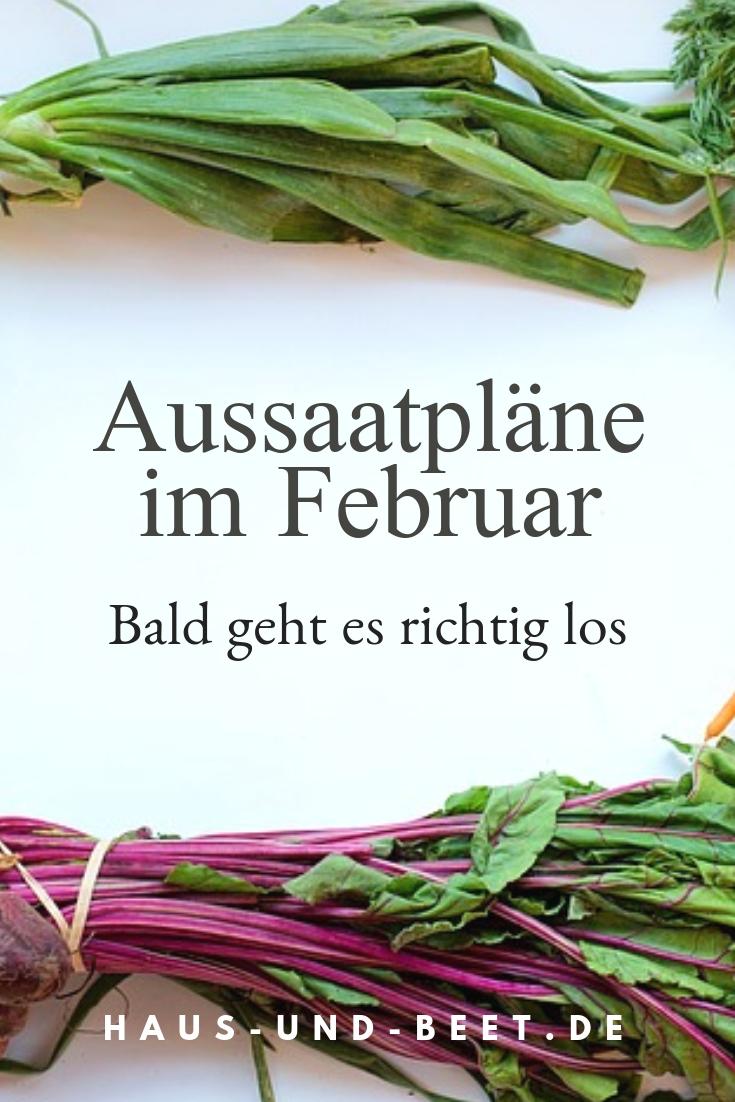 Aussaatpläne im Februar, Welches Gemüse im Februar anbauen