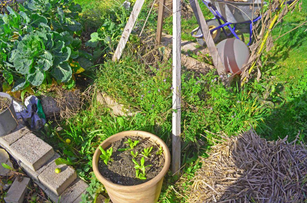 Gemüse anbauen Linkup