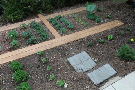 Gemüsebeet Stufen Grashüpfer, Gemüse anbauen Linkup