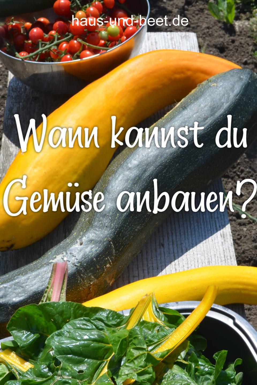 Wann Gemüse anbauen
