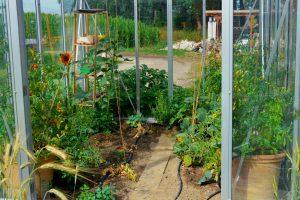 Ab wann kann man Gemüse anbauen