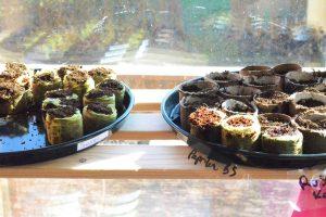 Aussaatpläne im März, Gemüse im März anbauen