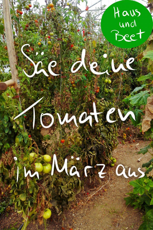 Aussaatpläne im März Tomaten aussäen
