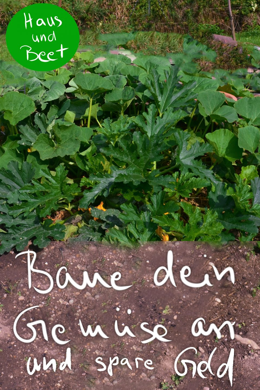 Baue dein Gemüse an und spare Geld