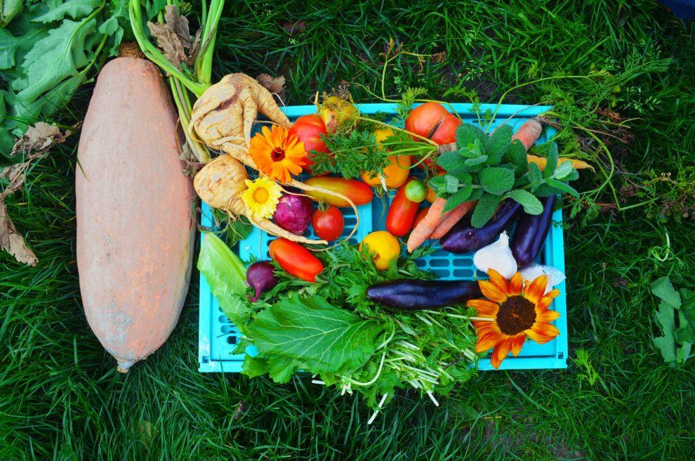 Gemüse anbauen und Geld sparen