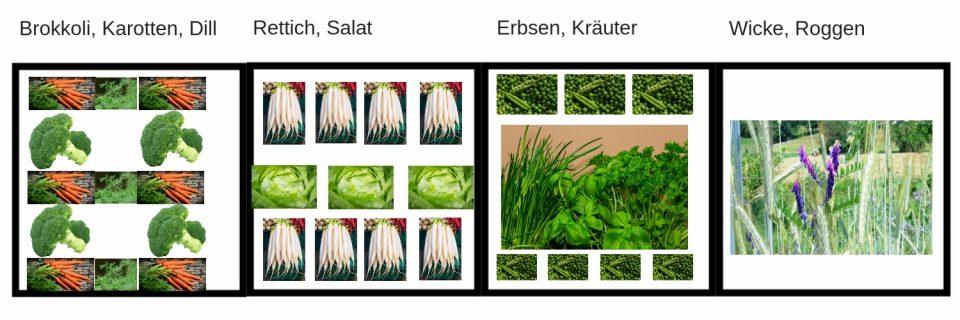 Gemüsebeet Fruchtfolge Mischkultur, Aussaatpläne im März