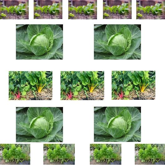 Spinat Mangold Weißkohl Salat, Aussaatpläne im April