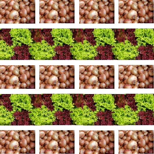 Zwiebel Salat Mischkultur, Aussaatpläne im April