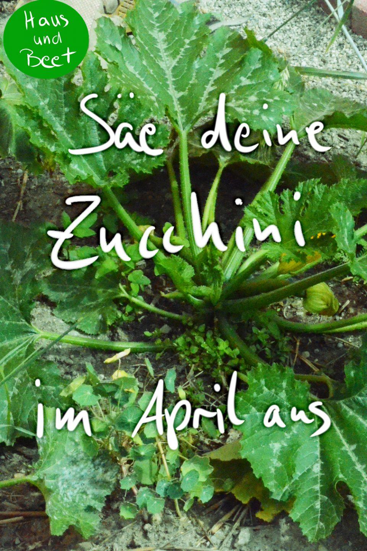 Aussaatpläne im April