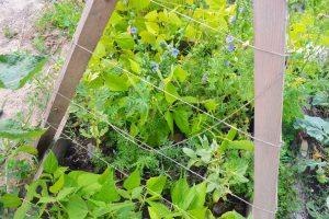 Gemüse anbauen im Frühbeet