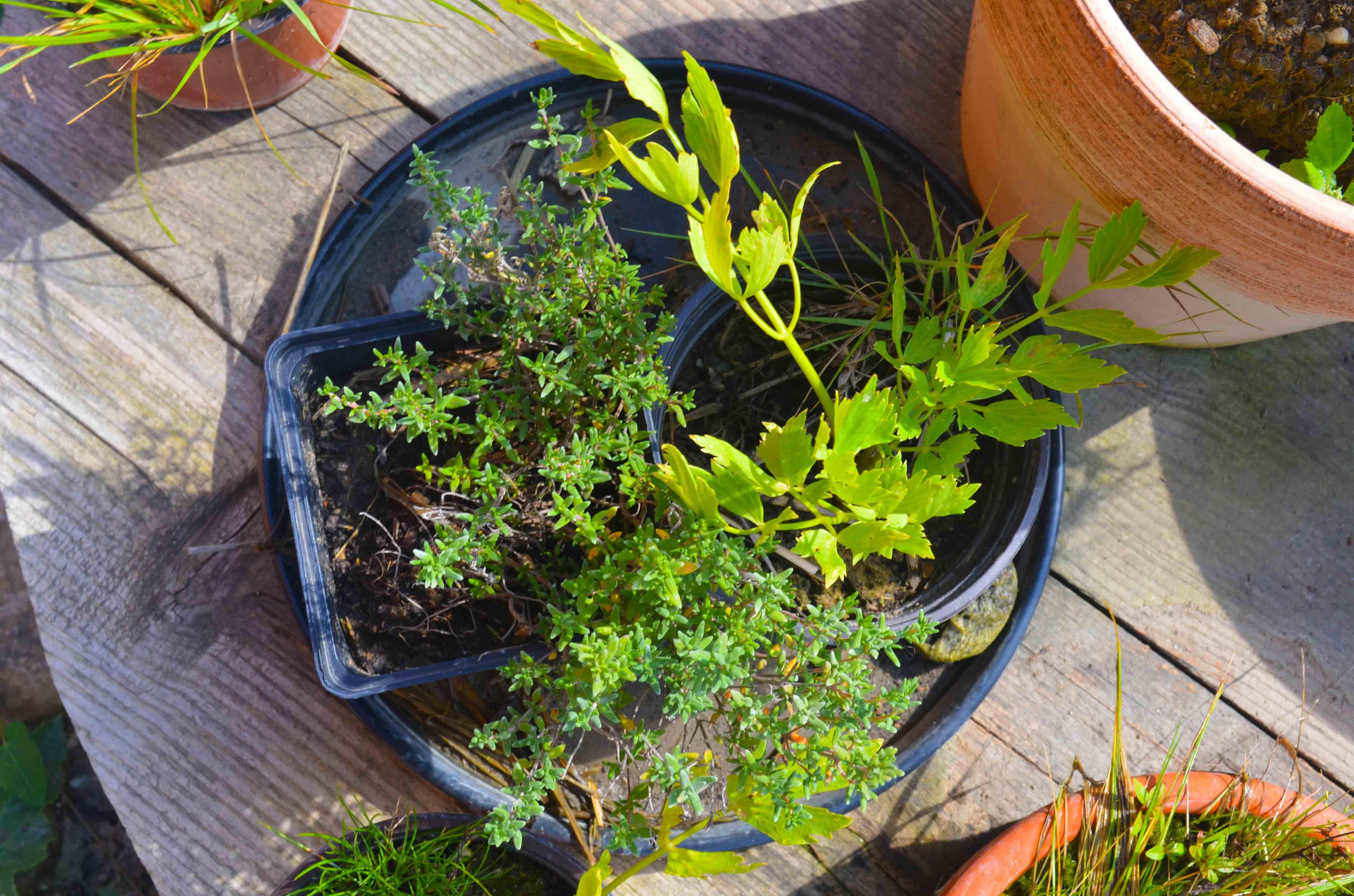 Gemüse anbauen im Topf für Anfänger - Haus und Beet