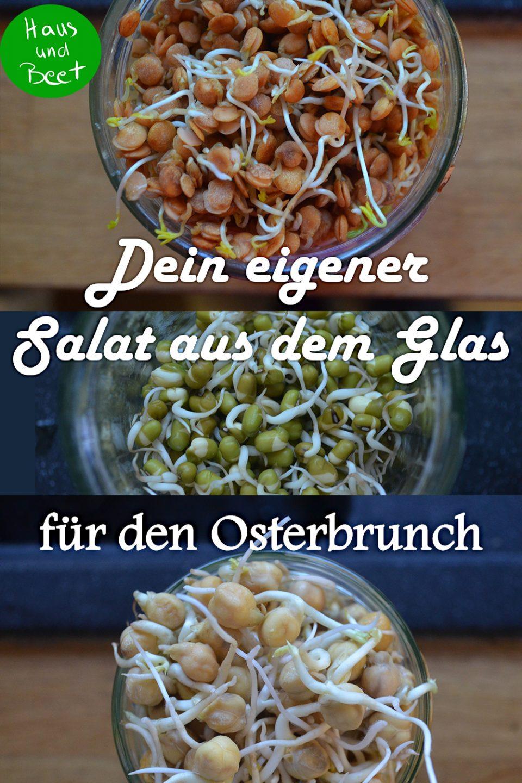 Sprossen Salat Gemüse aus dem Glas