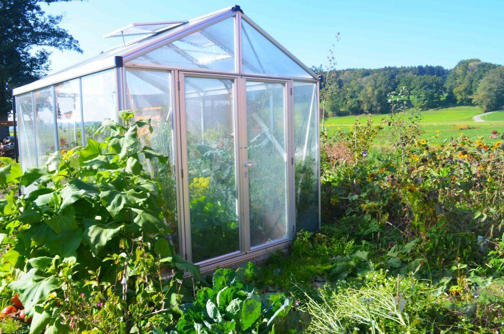 Gemüse im Gewächshaus anbauen