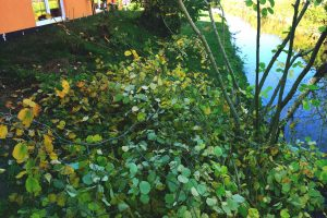 Gartenabfälle