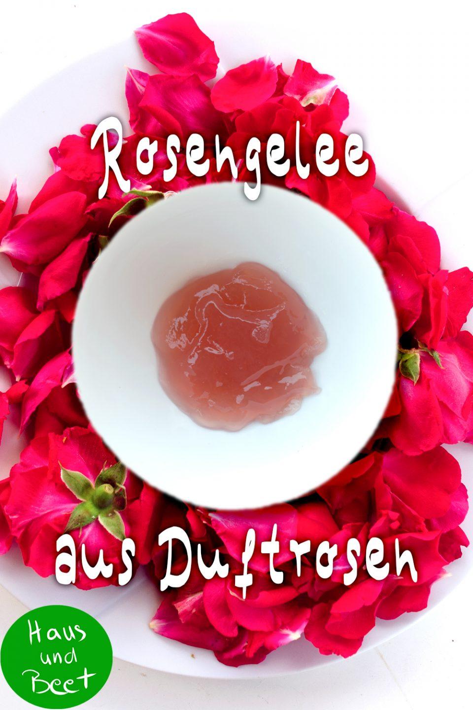 Rosengelee