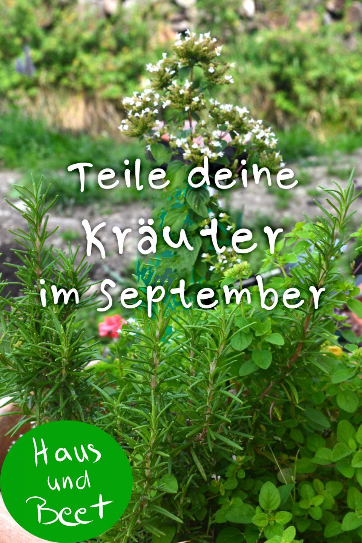 Garten im September Kräuter