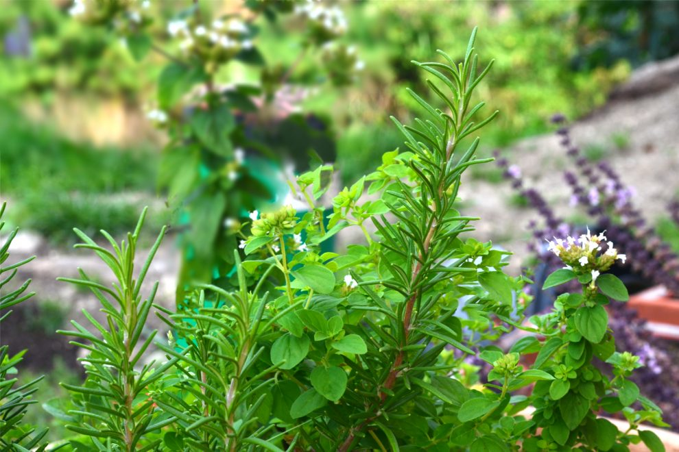 Garten im September