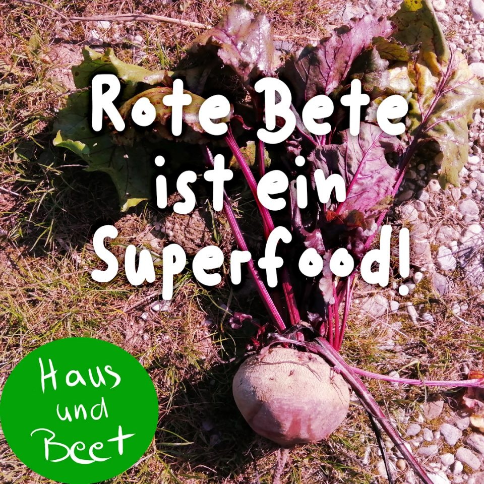 Rote Bete