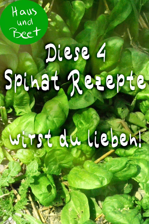 Spinat vegetarische Rezepte